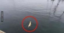 เจ้าของหมา สงสัยว่าทำไมมันลงไปในทะเลทุกวัน และก็พบว่านี่คือสิ่งที่มันไปหา คุณคิดไม่ถึงแน่ๆ
