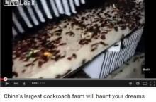 น่ารักป่ะล่ะT_T!!! พาเยือน ฟาร์มแมลงสาบ ในประเทศจีน