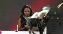 จะเป็นไง ถ้าจับคนไม่ชอบแมว ให้มาอยู่กับลูกแมว!!?