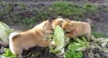โปรดระวัง!! ศัตรูพืชชนิดใหม่..ดูแล้วน่ารักอะ!!