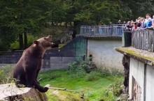 ขี้เกียจหนักมาก!! เมื่อเจ้าหมีนั่งเฉยรอให้คนป้อนอาหารให้ถึงที่