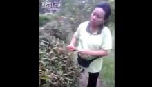 สุดอึ้ง!! เมื่อคุณป้าทำสวนเจอรังนกแล้วทำแบบนี้