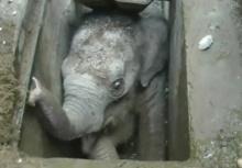 ภารกิจวัดใจ ช่วยลูกช้างตกท่อในศรีลังกา