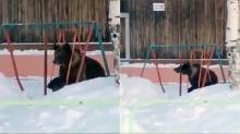 น่ารักจริงๆ! เจ้าหมีอ้วนมุ่งมั่นพยายามนั่งชิงช้าให้ได้ สุดท้ายเป็นแบบนี้?