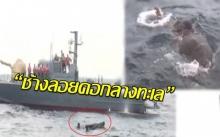 """มาได้ไง?!  กู้ภัยเร่งช่วยเหลือ""""ช้างลอยคอกลางทะเล"""" !! (คลิป)"""