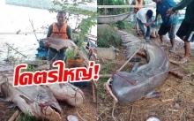 สุดฮือฮา! ชาวโคราชจับปลาบึกยักษ์ หนัก 100 กว่ากก. (มีคลิป)