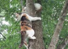 เก่งจริงนะ! แม่แมวสอนวิธีลงจากต้นไม้ให้กับลูก
