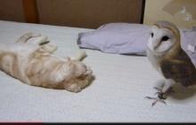 เพื่อนซี้คู่ใหม่ แมวกับนกฮูก น่ารักอ่ะ