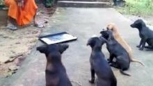 ดูแล้วยิ้มเลย..หมาวัดน่ารักๆ พระสอนวินัยลูกสุนัข 5 ตัวตอนให้อาหาร