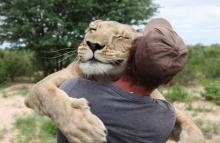 น่ารักมุ้งมิ้ง! เมื่อชายหนุ่มสอนสิงโตตัวเมียล่า