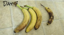 วิธีเก็บ กล้วยสุกไว้กินนานๆ ...