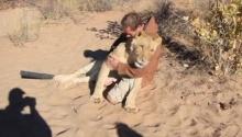 ความผูกพันระหว่าง คนกับสิงโต