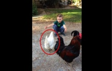 """เด็กน้อย """"ขอกอด"""" ไก่ตัวหนึ่ง…สิ่งที่เกิดขึ้นจะทำให้คุณยิ้มไปกับพวกเขา!"""