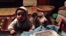 หมาพูดได้!!! เมื่อเด็กไม่ยอมเรียกหม่าม๊า น้องหมาเลยขอเรียกแทน!!