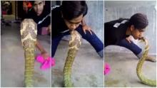 หวาดเสียวมากๆ หนุ่มน้อยโชว์จูบ งูจงอาง ตัวใหญ่