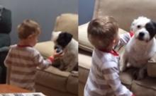 น้ำตาไหล ! เมื่อเจ้าหนูปาลูกบอลให้น้องหมา แต่งานนี้กลับมีเรื่องให้น่าสงสาร