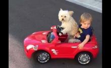 นักรักอะ!!ซิ่งกับพี่มั้ยน้อง..น้องหมาขับรถให้เด็กนั่ง