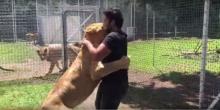 ภาพประทับใจ!! ความผูกพันระหว่างสิงโตและคนเลี้ยง..น่ารักจัง