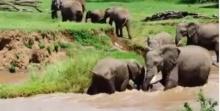 วินาทีสุดประทับใจ..แม่ช้างช่วยลูกชายฝ่ากระแสน้ำเชี่ยว