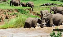 """นาทีชีวิต!""""แม่ช้าง"""" ช่วย """"ลูกช้าง"""" ถูกกระแสน้ำเชี่ยวพัด"""