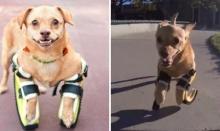 น้องหมาพิการวิ่งพริ้ว ดั่งได้ชีวิตใหม่!