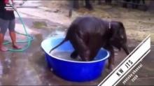 ช้างๆๆ น้องเคยเห็นช้างอาบน้ำหรือป่าว