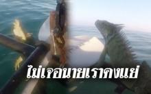ไม่เจอนายเราคงแย่!! หนุ่มล่องเรือกลางทะเล เจออีกัวนาว่ายขอความช่วยเหลือ ตะกายขึ้นอย่างไว!!