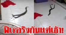 ตะลึงตาค้าง!! งูเล่นบทสัมพันธุ์สวาทในห้องครัว กอดเกลียวเกลือกกลิ้ง แถมบอกเลขที่บ้าน? (คลิป)