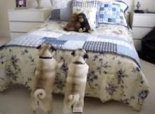 หมาขี้หวง! เห่าไล่ตุ๊กตาลิง บนเตียงนอน
