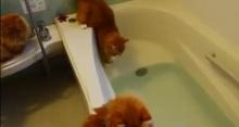 ขำกลิ้ง! เจ้าเหมียวโนเพื่อนทิ้ง เพราะตกอ่างน้ำ!