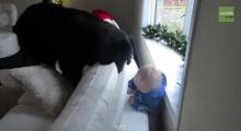 จะหาเจอมั้ย? เด็กน้อยเล่นซ่อนแอบกับน้องหมา