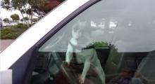 หมาสุดฉุน! เจ้านายทิ้งไว้ในรถ บีบแตรเรียกเลยจ้า!