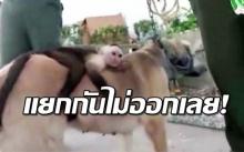 แม่หมา-ลูกลิง ต่างเติมเต็มชะตาเศร้าของกันและกัน จนแยกไม่ออก!