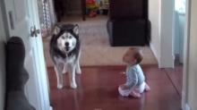 เมื่อ หมา เถียงกับ เด็ก ใครจะชนะ ฮาๆ