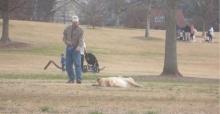 ขำกลิ้ง! หมาขี้เกียจ ไม่ยอมกลับบ้าน ลากเท่าไรก็ไม่ไป!