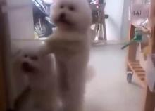 ฮากระจาย! น้องหมาขาแดนซ์
