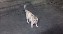 แมวสุดโหด! หน้าบ้านข้า ใครอย่าแตะ!