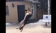 รวมช็อตเด็ด! ความ Fails ของน้องหมา