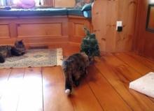 เหมียวตกใจสุดขีด เมื่อเจอต้นคริสต์มาสพูดได้!