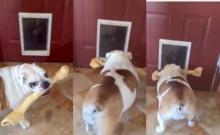 เมื่อกระดูกมันชิ้นใหญ่กว่าประตู แล้วเจ้าหมาจะทำอย่างไร!