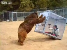 .. คน เห็น หมี .. ของจริง