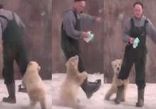 อย่างน่ารัก!!หมีขั้วโลก เกาะขาอ้อนเจ้าหน้าที่แน่นเลย!!