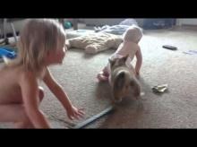 เมื่อเจ้าหมา Corgi ตัวน้อยพยายามดึงผ้าอ้อมของเด็กคนนี้ ความน่ารักก็เกิดขึ้น
