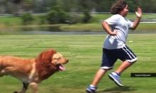 หัวใจจะวาย!! จับน้องหมาปลอมเป็นสิงโตแกล้งคน