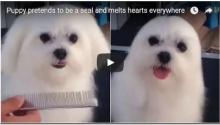 ชาวเน็ตต้องอมยิ้ม น้องหมาแปลงร่างกลายเป็น แมวน้ำ