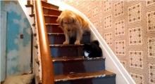 อย่างฮา! น้องหมาไม่กล้าเดินผ่านเจ้าเหมียว