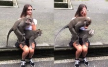 สุดฮา!! ลิงตัวผู้และตัวเมียผสมพันธุ์กันบนตักนักท่องเที่ยวสาว โจ๋งครึ่มกันสุดๆ (คลิป)
