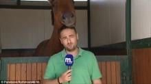 ม้าเป็นสัตว์สายฮา! แผลงฤทธิ์ป่วนทำนักข่าวหลุดเทค ถ่ายใหม่เป็นสิบๆรอบ