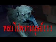 หลบไปพวกมนุษย์!!! น้องหมาสุดโหดตามฆ่ามาเฟียยกแก๊ง