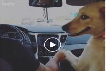 ตุ๊กตาหน้ารถ! สาวเซ็ง โดนหมาที่เลี้ยงแย่งนั่งข้างหน้ากุมมือสามีโชว์